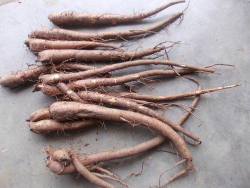 Roots-of-Coleus-forskohlii