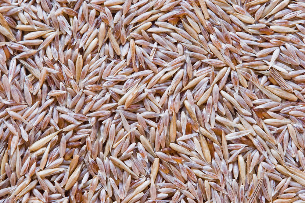Seeds-of-Colonial-bent