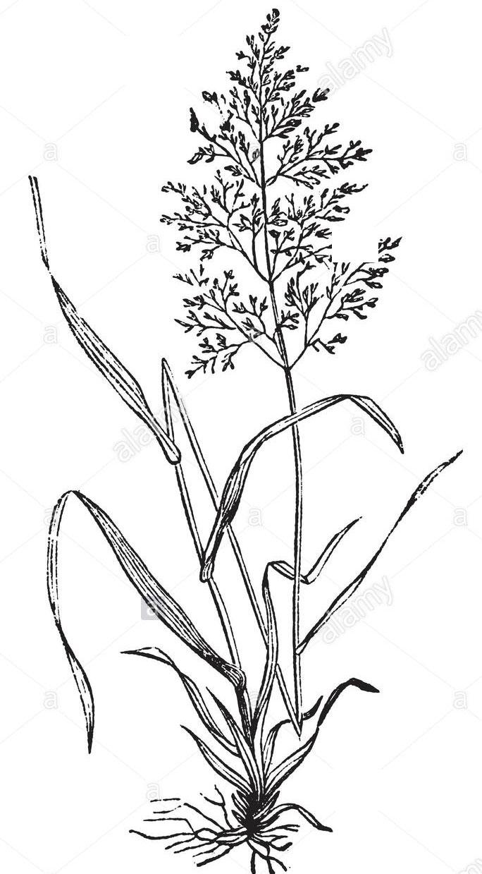 Sketch-of-Colonial-bent
