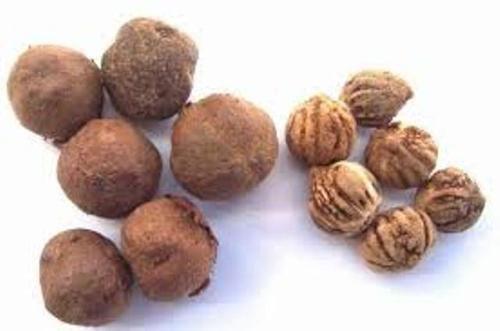 Seeds-of-Teak-plant