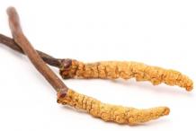 Cordyceps-2