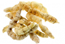 Fresh-Cordyceps