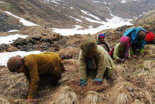 People-searching-for-cordyceps
