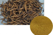 Cordyceps-Powder