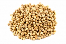 Coriander-seed-collection