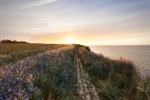 Cornflower-field