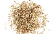 Cornflower-seeds