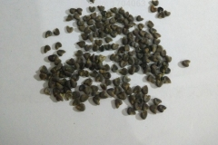 Seeds-of-Cotton-Rose