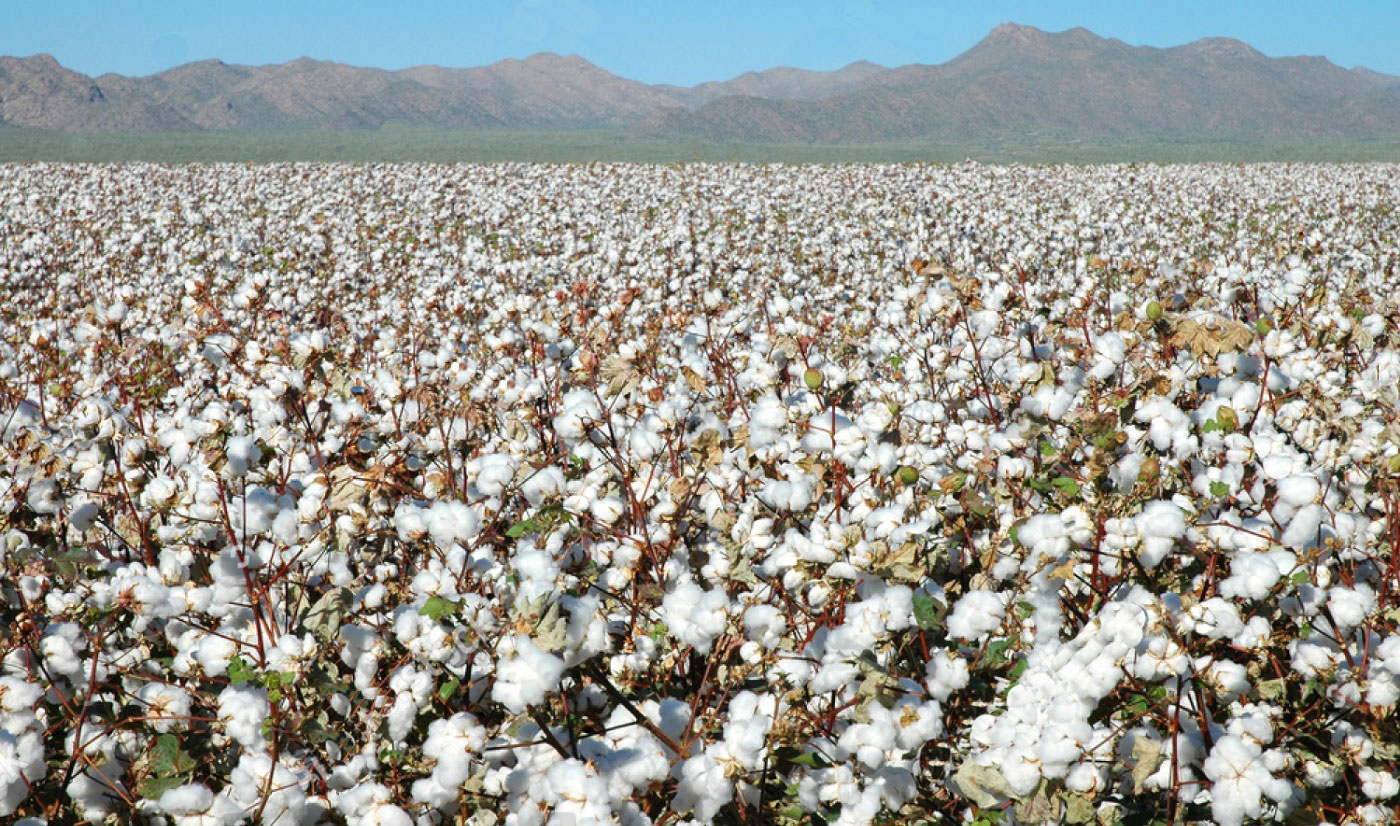 Cotton-Farming