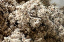 Cottonseed-hulls