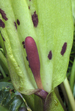 Close-up-view-of-Flower