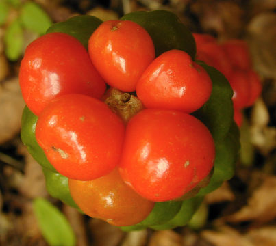 Close-up-view-of-fruit