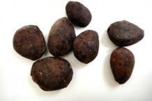 Cupuassu-seeds-Cupuassú