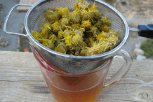 Curlycup-Gumweed-tincture