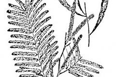 Sketch-of-Cutch-Tree