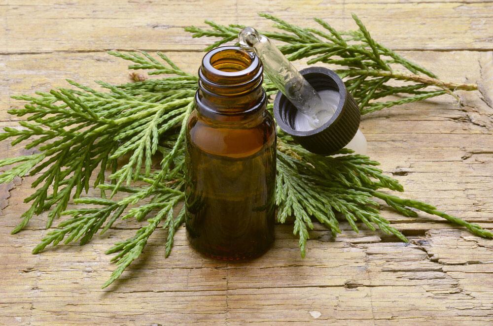 Cypress-Essential-Oil