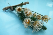 Dried-bunch-of-Daisy