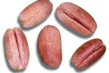 Date-seed-2