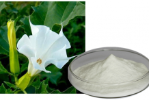 Datura-Flower-extract