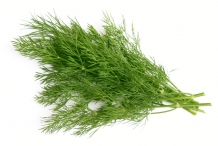 Leaves-of-Dill