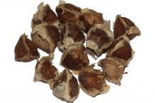 Drumstick-seeds