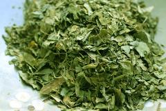 Drumstick-dried-leaf