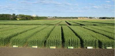 Farming-of-Durum