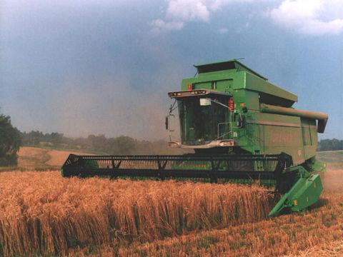 Harvesting-of-Durum