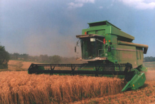 Harvesting-of-Durum
