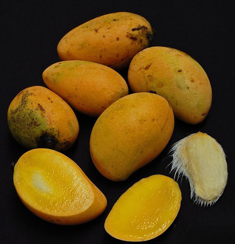 Mature-Egg-Mango-Fruits