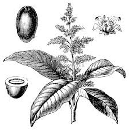 Sketch-of-Egg-Mango