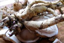 Elecampane-Root