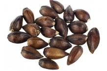 Ephedra-seeds