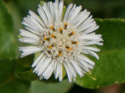 Closer-view-of-Flower