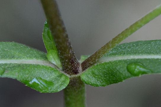Stem-showing-Leaf-bases