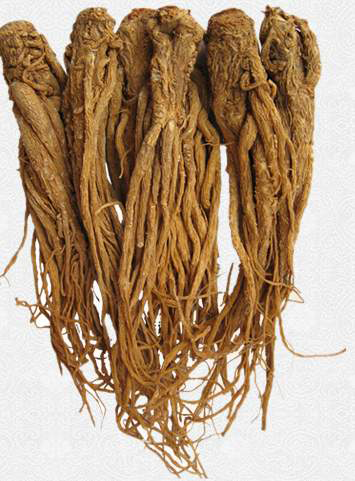 Female-Ginseng-Root
