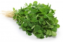 Fenugreek-plant