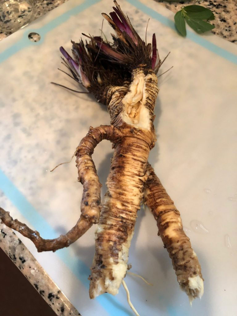 Root-of-Fernleaf-biscuitroot