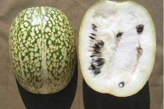Half-cut-Figleaf-gourd