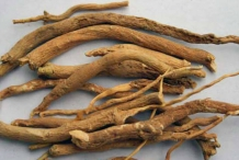 Fingerroot dried-Cu ngai