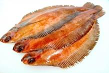 Flatfish-4