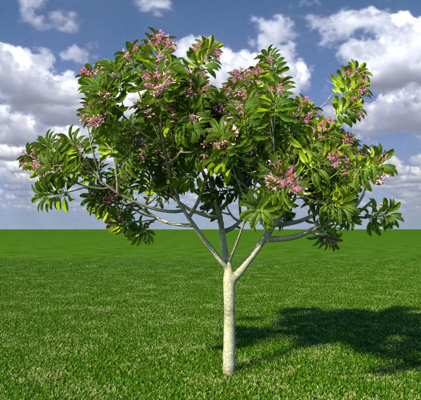 Frangipani-tree
