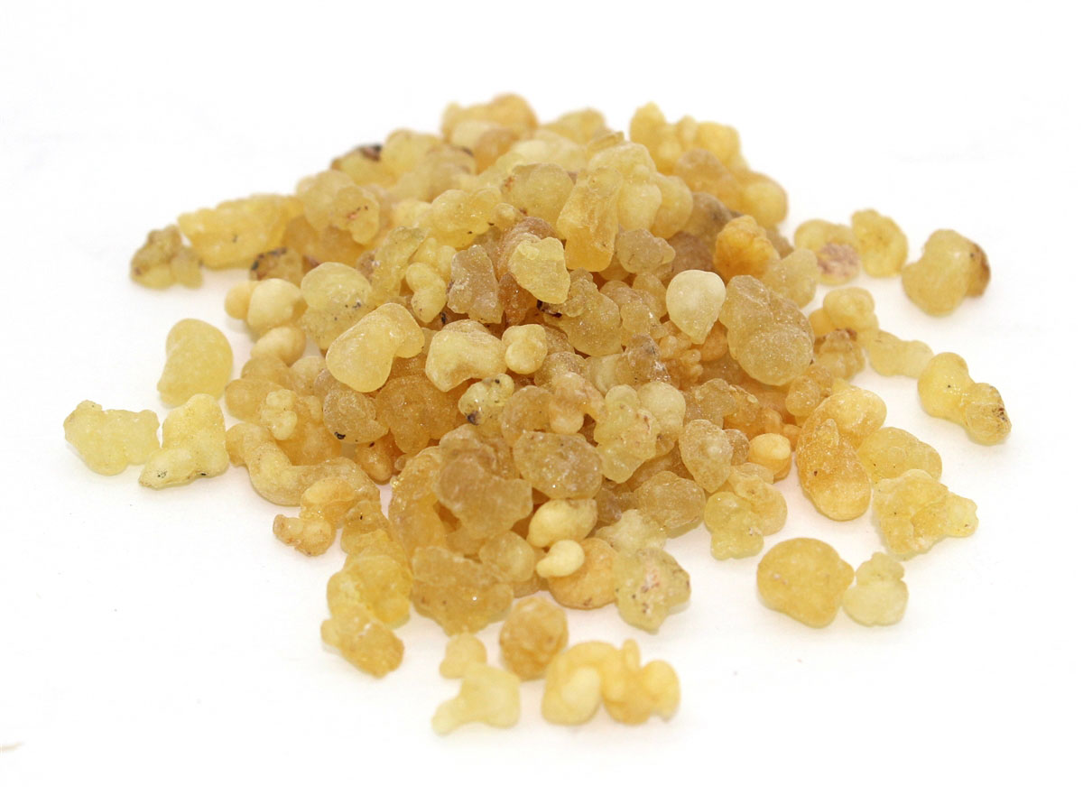 Harvested-dried-resins-of-Frankincense-tree