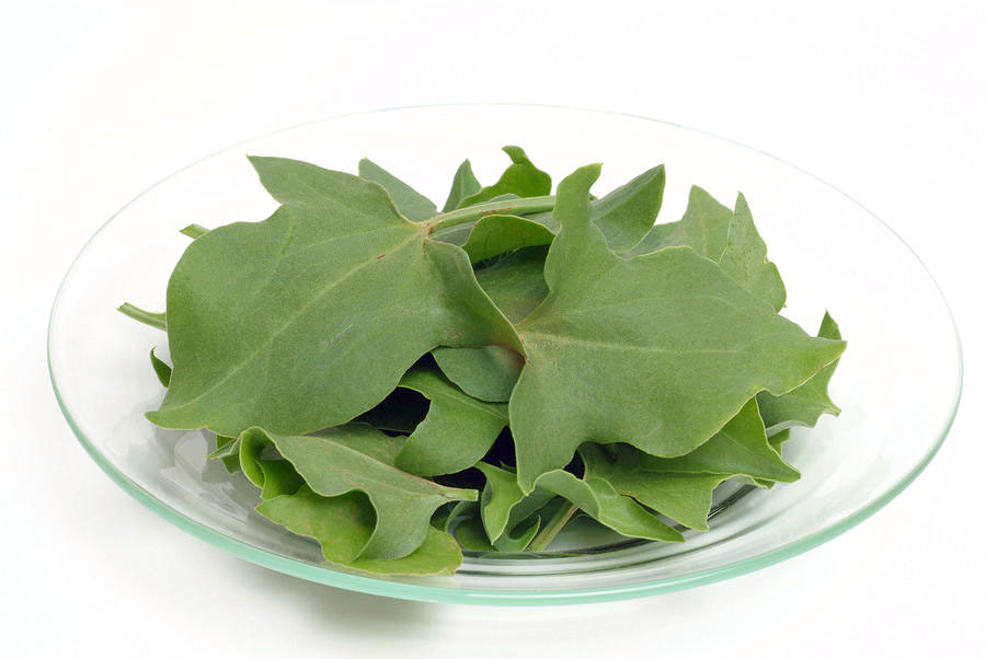 Collected-French-sorrel-leaves