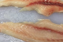 Freshwater-drum-fillets