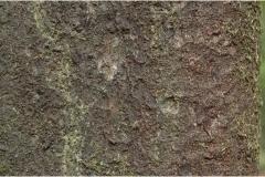 Garcinia-cambogia-bark