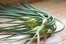 Garlic-scapes-3