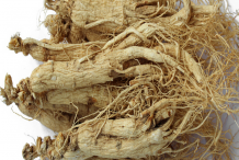 Dried-Ginseng-Root