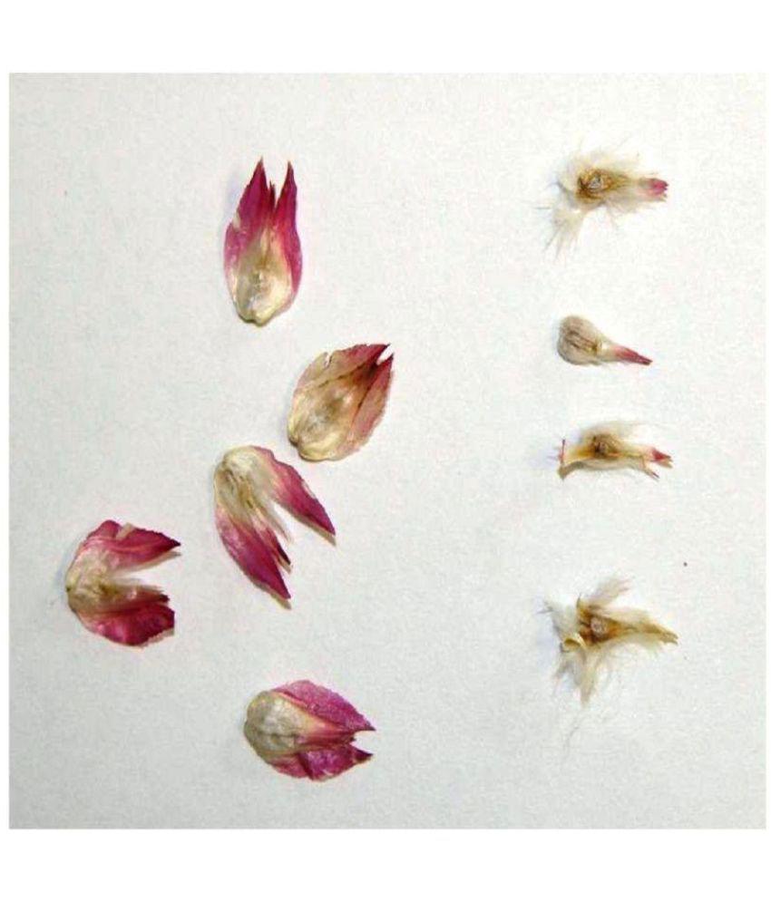Seeds-of-Globe-Amaranth