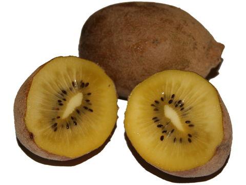 Golden-Kiwi